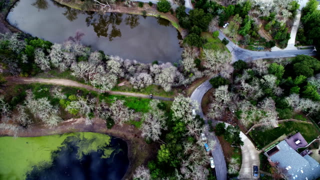 woods of silicon valley, aerial view - silicon valley stock videos & royalty-free footage