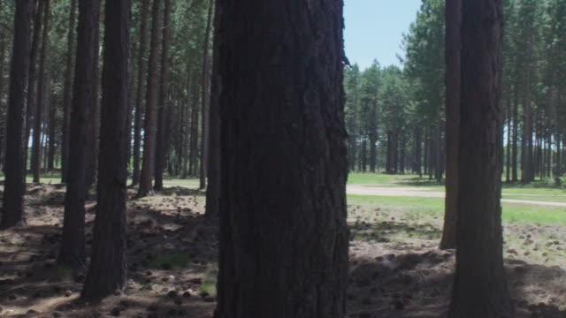 woods - kiefernwäldchen stock-videos und b-roll-filmmaterial