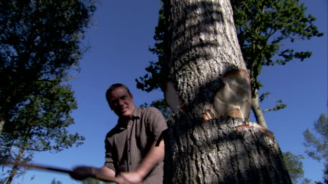 a woodsman uses an ax to chop down a tree. available in hd. - cut video transition stock videos & royalty-free footage