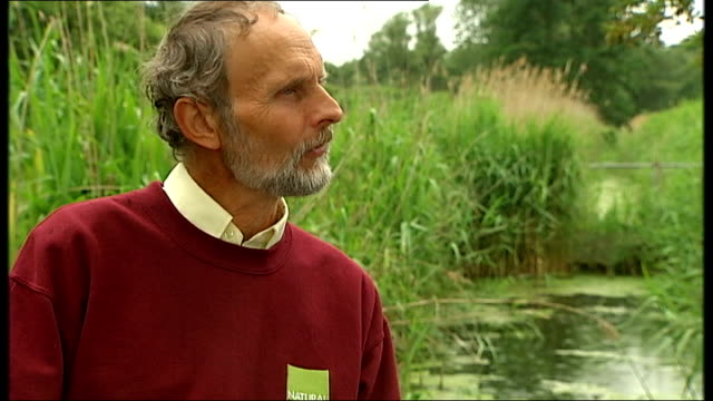 long green grasses pink marsh orchid flower ragged robin flower river long green reed plants of reedbeds chinese water deer alan bowley interview sot... - fen stock videos and b-roll footage