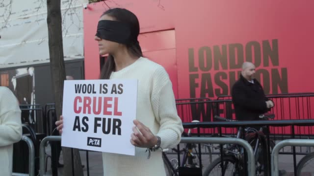 vídeos de stock e filmes b-roll de wool protesters from peta uk gather outside london fashion week hq their outreach coordinator says the campaign group want to tell the public wool... - protestante