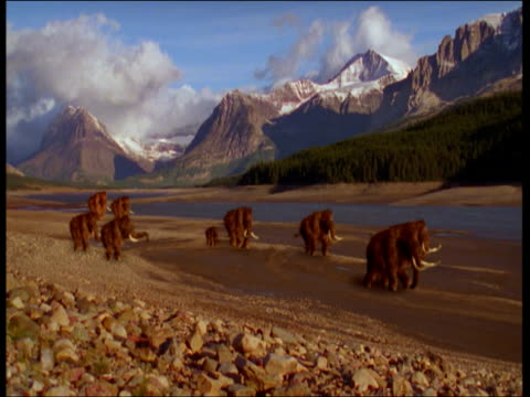 woolly mammoths migrate across north america. - mammal stock videos & royalty-free footage