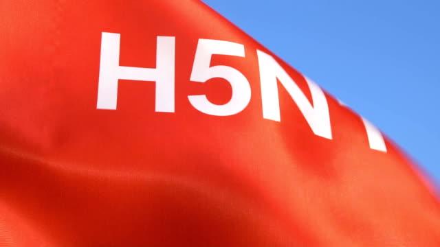 h5n1 wortflagge winken in den himmel - geschlechtskrankheit stock-videos und b-roll-filmmaterial