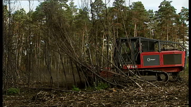 work begins to restore woods in berkshire destroyed by fire reporter along with marcus stroud marcus stroud interview sot mulching machine pushing... - berkshire england stock-videos und b-roll-filmmaterial