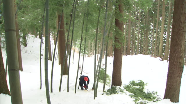 a worker cuts bamboo in a snowy forest in order to make charcoal. - moving down stock videos & royalty-free footage