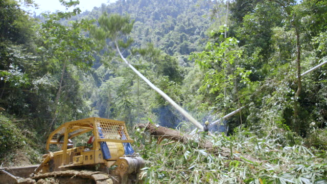 ws pan worker felling rainforest tree / tawau, sabah, malaysia - moving down video stock e b–roll