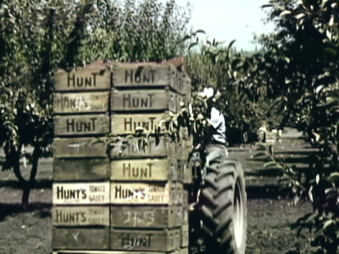 montage worker hauling tractor load of crated pears from orchard / sebastopol, california, united states - einzelner mann über 40 stock-videos und b-roll-filmmaterial