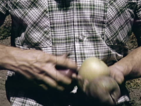 montage worker holding yellow and red delicious apples, comparing them to a third type of apple / sebastopol, california, united states - red delicious stock videos & royalty-free footage