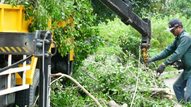 vídeos de stock, filmes e b-roll de trabalhador manter algum galho após o corte - forester