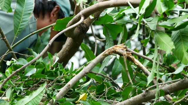 vídeos de stock, filmes e b-roll de trabalhador manter algum galho após o corte - ramo parte de uma planta