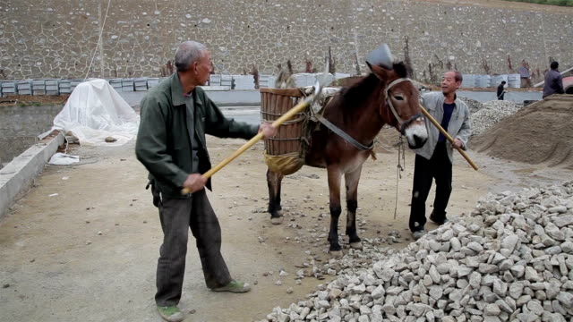 worker loading horse with stone in zhashui, shaanxi, china - esel stock-videos und b-roll-filmmaterial