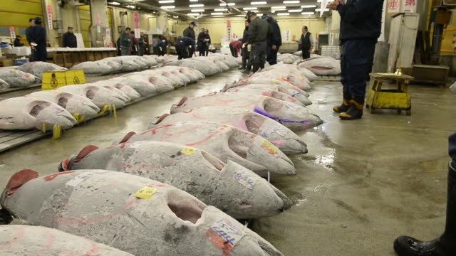 A worker marks frozen tuna with paint prior to the year's first auction at Tsukiji Market in Tokyo Japan on Sunday Jan 5 A buyer inspects frozen tuna...