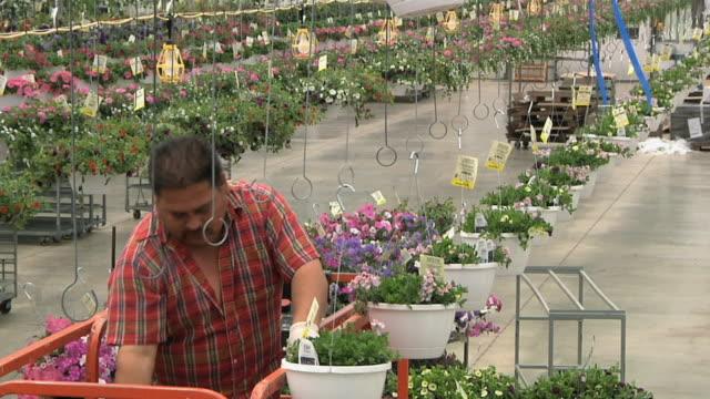 ms tu worker on scissors lift hanging flowering baskets on elevated conveyor belt in commercial greenhouse, carleton, michigan, usa - dreiviertelansicht stock-videos und b-roll-filmmaterial