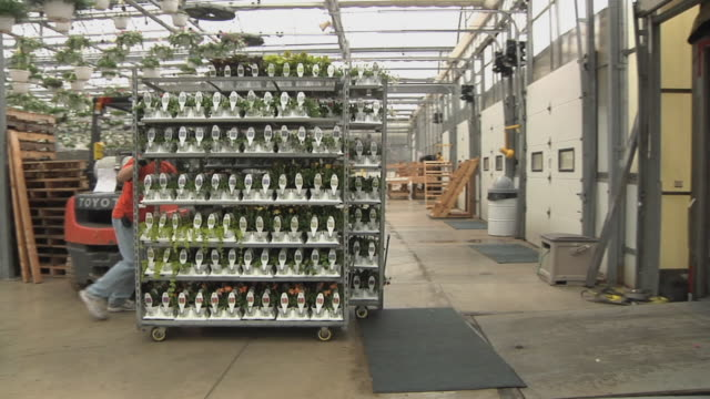 slo mo ws pan worker pushing rack with potted plants at commercial greenhouse, carleton, michigan, usa - gewächshäuser stock-videos und b-roll-filmmaterial