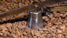 Worker roasting cocoa beans in a chocolate making factory