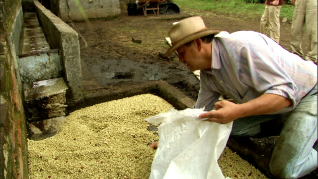 a worker scoops raw coffee beans from a holding tank into a bag. - manciata attività video stock e b–roll