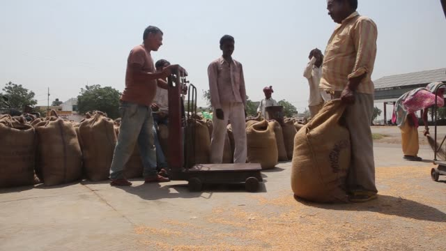 a worker seals sacks of processed wheat at the new grain market in karnal haryana india on thursday may 19 workers unload wheat from a trailer at a... - haryana stock videos & royalty-free footage
