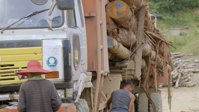 MS Worker securing logs to truck / Tawau, Sabah, Malaysia