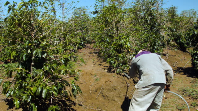 A worker sprays an ecofriendly pesticide to combat against coffee leaf rust on the coffee plants at the Doka Estate coffee farm on March 25 2015 in...