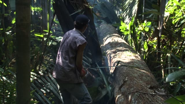 worker uses a chainsaw to chop a fallen tree, in rondonia, brazil, during june 2017. deforestation is increasing in the brazilian amazon and rose 29... - cut video transition stock videos & royalty-free footage