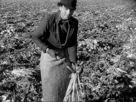 a worker uses a scythe to chop the leaves off the top of harvested sugar beet - scythe stock videos and b-roll footage