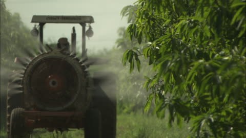 a worker uses a tractor to spray mango trees with amonia at a fruit farm in juazeiro, brazil.  - mango fruit stock videos & royalty-free footage
