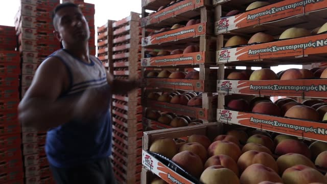 Workers arrange pallets with crates of peaches and nectarines ready for shipment at the processing facility operated by the Agricultural Cooperative...
