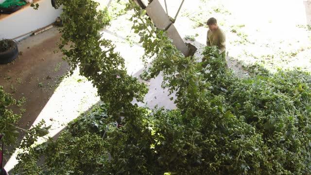 vidéos et rushes de ouvriers à l'installation de récolte de houblon - outil de production