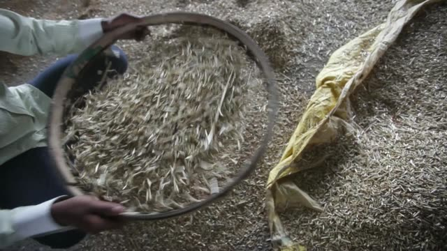 workers clean a pile of harvested wheat grain at a market in karnal haryana india on monday april 7 a worker uses a sieve to clean harvested wheat... - haryana stock videos & royalty-free footage