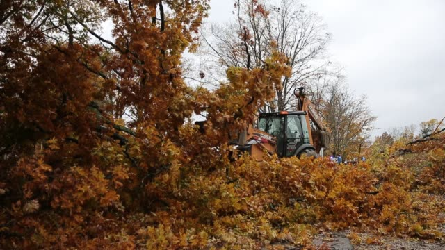 workers clear a tree fallen along popcorn road after a severe autumn thunderstorm which may have included a tornado passed through sunday november 5... - herbst stock-videos und b-roll-filmmaterial
