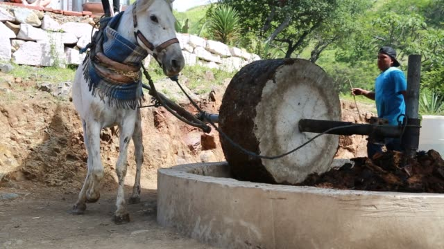 workers dig a hole for a wood oven as part of the distilling process for turning agave into mezcal tequila in oaxaca city mexico on august 19th... - mill stock videos & royalty-free footage