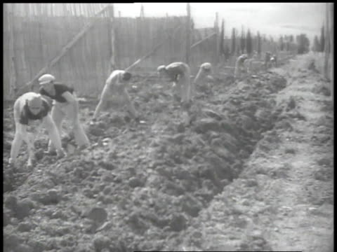1938 ws workers digging in fields - palestinian stock videos & royalty-free footage