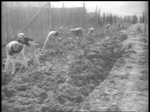 stockvideo's en b-roll-footage met 1938 ws workers digging in fields - palestijnse cultuur