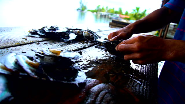 workers extracting preparing pearls tahiti south pacific - tahaa island stock videos & royalty-free footage