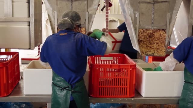workers fill polystyrene boxes containing rock lobsters with dry wood flakes at the geraldton fishermen's cooperative ltd processing facility a... - polystyrene stock videos & royalty-free footage