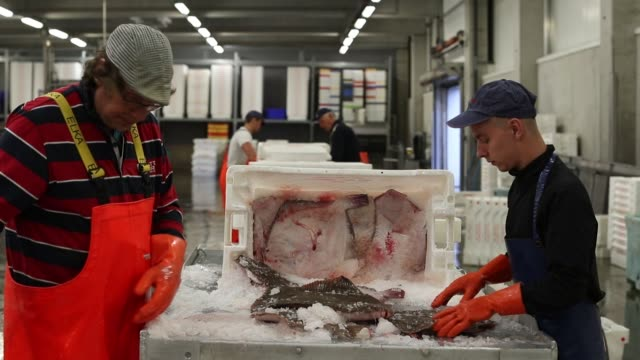 workers hand sort a crate of freshly caught plaice ahead of auction at the port of den helder netherlands on friday aug 4 2017 - pesce piatto video stock e b–roll