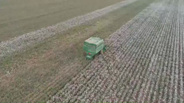 workers harvest the cotton crop in a cotton field in southeastern sanliurfa province of turkey on october 14 2018 - harvesting stock videos and b-roll footage