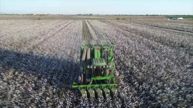Workers harvest the cotton crop in a cotton field in the Cukurova district of Adana southern Turkey on October 26 2017