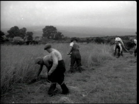 workers harvesting wheat by hand w/ unusual rounded top scythes ms child gathering cut wheat w/ male cutting w/ scythe cu male middleaged farmer... - scythe stock videos and b-roll footage