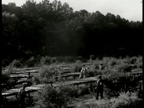 workers in blueberry field w/ elevated walkways. black male standing picking berries from bush. black male hand holding wooden container almost... - farm worker stock videos & royalty-free footage