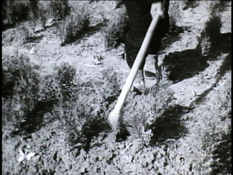 workers in farm field using handheld tools vs farmers workers aerating soil around young trees vs seedling roots being wrapped in straw for other... - roped off stock videos and b-roll footage