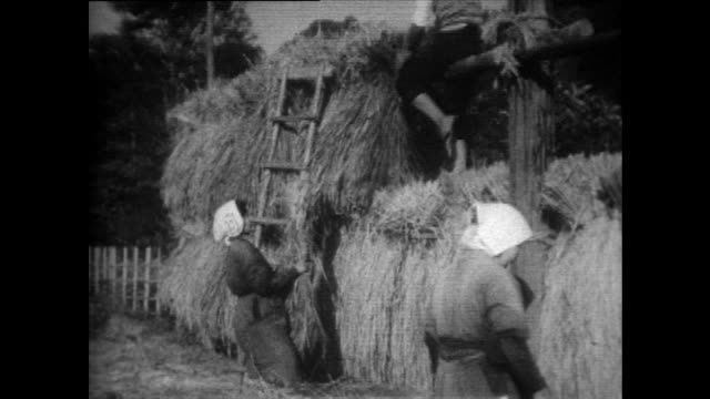 workers lay out harvested rice for drying in japan; 1958 - 1958 stock videos & royalty-free footage