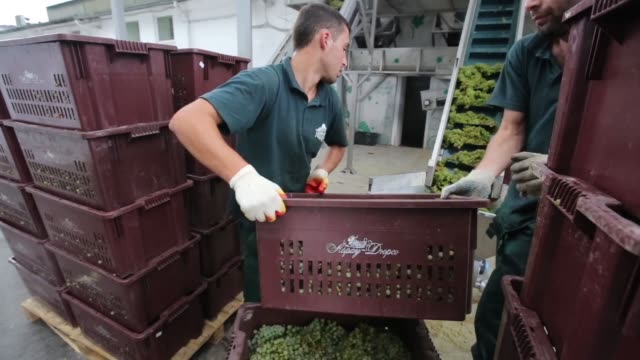 workers load crates of grapes onto a trailer at the abraudurso pjsc winery vineyard in abrau durso village russia on wednesday aug 19 2015 shots wide... - holzkiste stock-videos und b-roll-filmmaterial