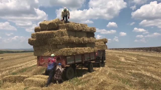 workers load hay bales onto a tractor trailer in a wheat field in northwestern edirne province of turkey on july 07 2018 - hay stock videos & royalty-free footage