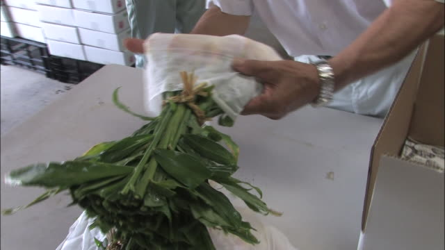 workers pack fresh shussai ginger into boxes for shipping. - shimane prefecture stock videos & royalty-free footage