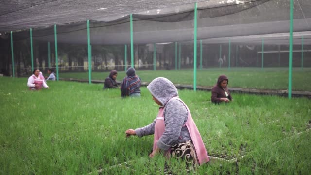 workers plant tree saplings inside the san francisco tree nursery in cheran michoacan mexico on june 9 2017 shots wide shot of the interior of san... - reforestation stock videos and b-roll footage