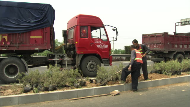 vídeos de stock e filmes b-roll de ws pan workers planting bushes and shrubs on busy highway median, beijing, beijing, china - só homens maduros