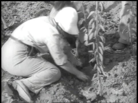 stockvideo's en b-roll-footage met 1938 ha workers planting orange trees - palestijnse cultuur