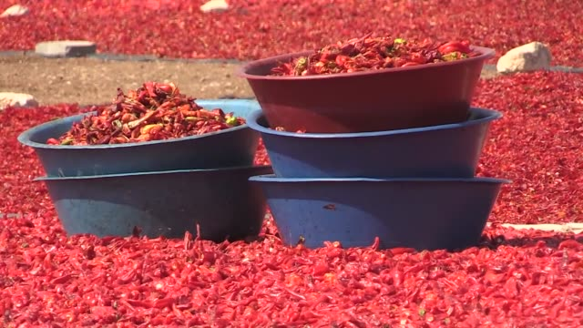 workers process and dry isot peppers also known as isot biber or urfa biber under the sun in sanliurfa turkey on august 19 2018 isot is a type of... - drying stock videos & royalty-free footage