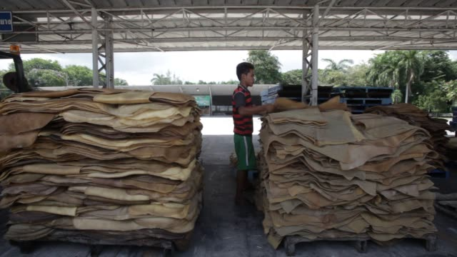 vídeos de stock, filmes e b-roll de workers process and move piles of rubber sheets waiting to be smoked at the eakpon klong ngae ltd factory in khlong ngae songklha province thailand... - látex borracha